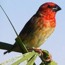 Kebbi wants FG's support against Quelea Birds