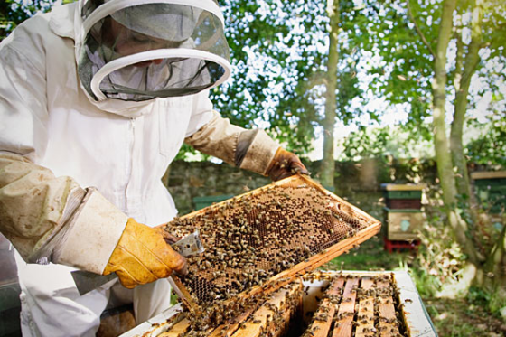 Expert says bee farming can boost Nigeria's GDP by 18%
