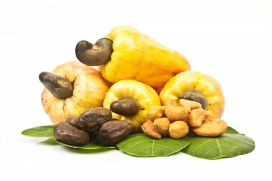 NEXIM Bank lauds NCAN for re-positioning cashew industry