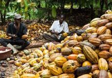 6 cocoa processors owe Nigerian banks N50bn