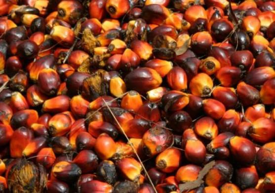 Nigerians hit as demand pushes up palm oil prices by over 100%