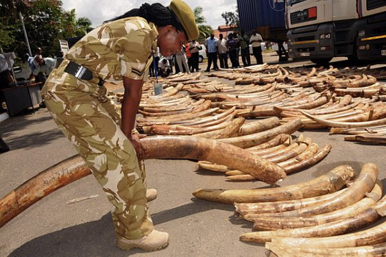 South Sudan bans ivory trade for 10 years
