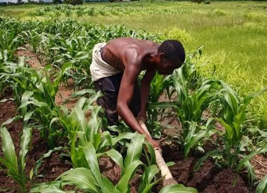 agriculture in nigeria The green alternative the national e-agriculture web portal is a strategic initiative of the national information technology development agency (nitda) in collaboration with the federal ministry of agriculture and rural development (fmard), to showcase the essential features and key aspects of the food and agriculture industry in nigeria.