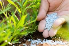Kano seeks FG support for pilot NEEM fertilizer processing plant