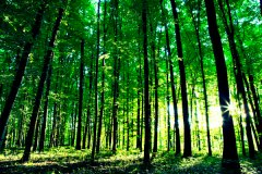 Great Green Wall Programme: Borno Govt. raises 300,000 seedlings – Official