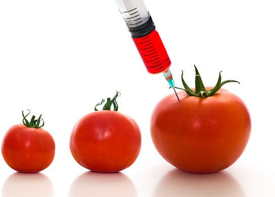 Consumers safety in focus as scientists begin analysis of GMO products