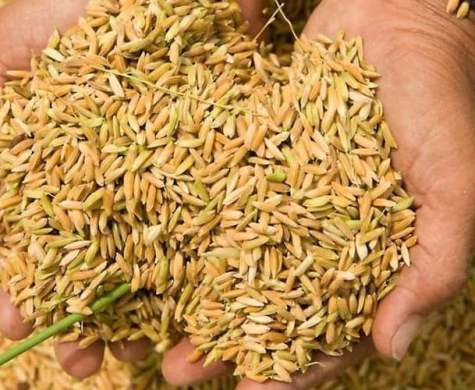Nigeria's quest for food sufficiency  opens N525bn opportunity in seeds industry