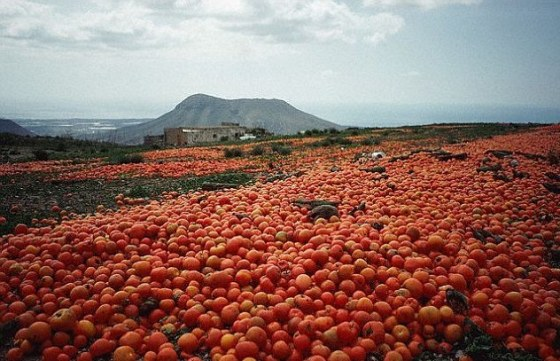 Easy Trust engages 5000 famers for tomatoes production in Kaduna
