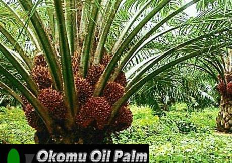 Okomu Oil