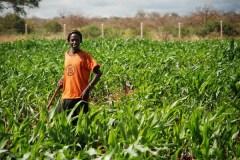 FADAMA provides support for 14,495 tomato, sorghum, rice farmers in Kano