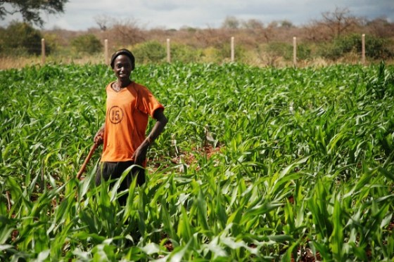 Agric Credit Guarantee Scheme declines by 38 percent in 2 years
