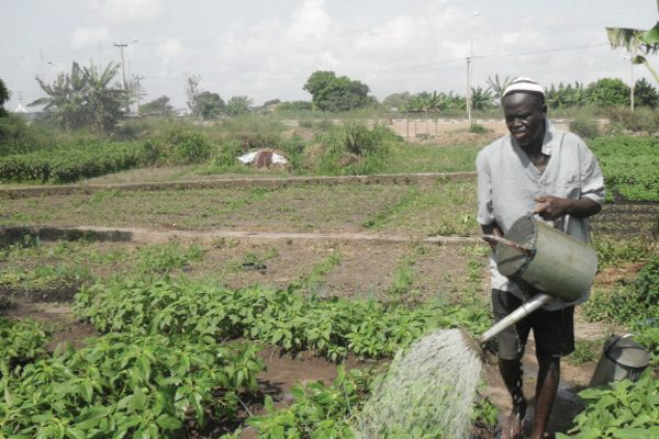 Agric growth depends on private sector participation - NCARD