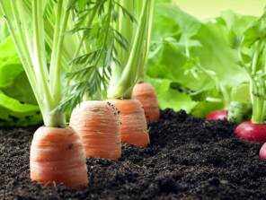 Urgent Action Needed to address Africa's Soil Health Issues, Say Experts