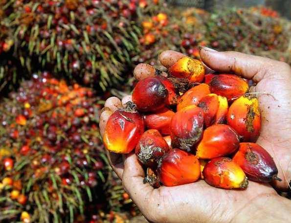 Palm Oil producers continue growth streak as H1 sales soar