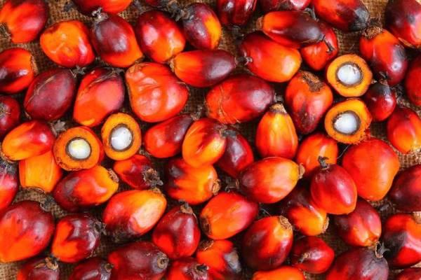 Weaker palm oil prices crimp Presco, Okomu H1 earnings