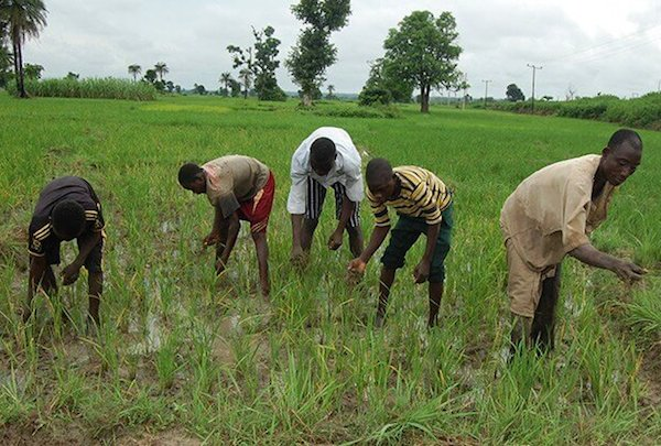 NIRSAL flags off model to empower smallholder farmers, boost agric output