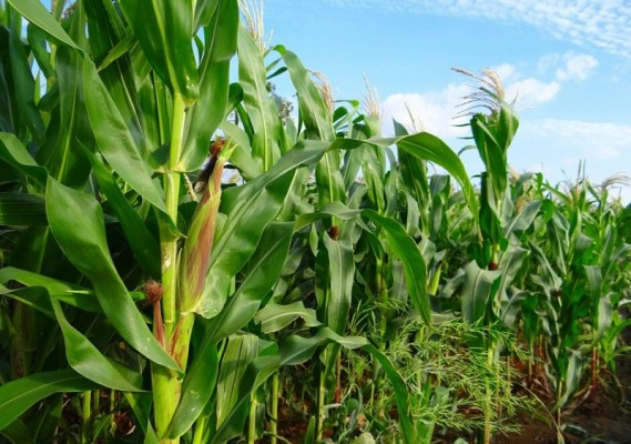 NIRSAL provides breakdown of $373m facilitated for agriculture