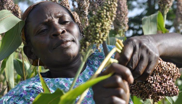 We've catalysed N102bn funding for agri-financiing since 2016- NIRSAL