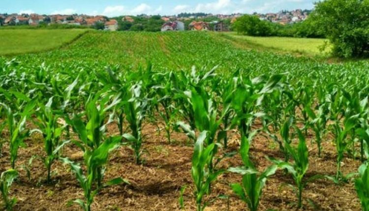 Nigeria's agricultural sector