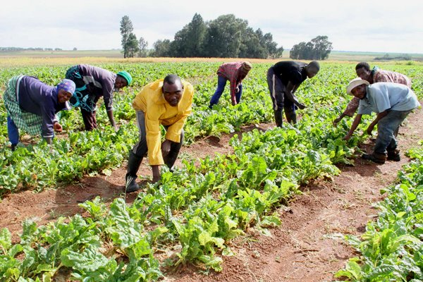 Transforming Nigeria's subsistent agriculture to commercial requires deliberate efforts, says Dan-Ali