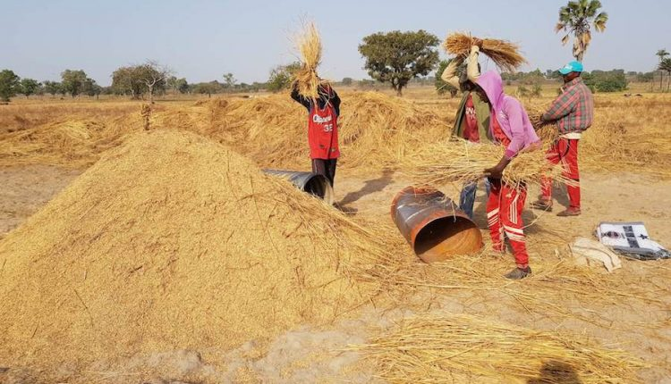 Border closure, local rice production and safety