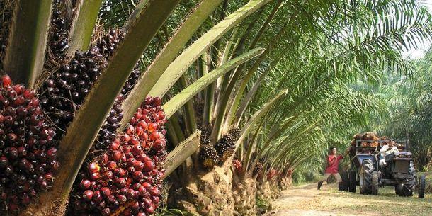 Is Okomu Oil Palm set to halt undulating earnings trend?