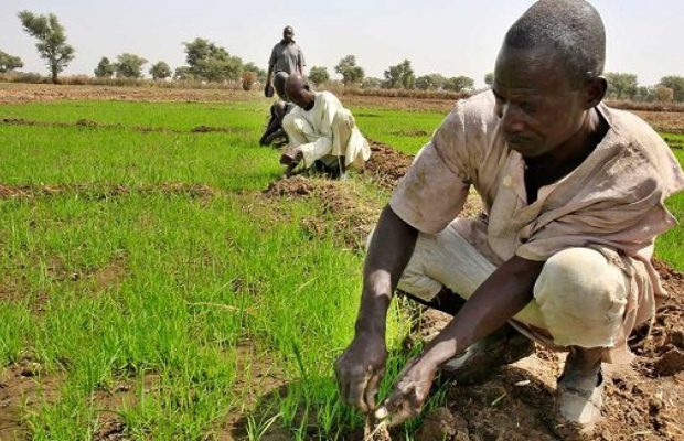 Govt not engaging farmers enough to develop agric, leaders say as they chart solutions