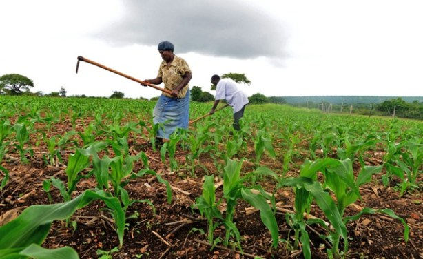Lockdown holds lessons for future preparedness in agric sector