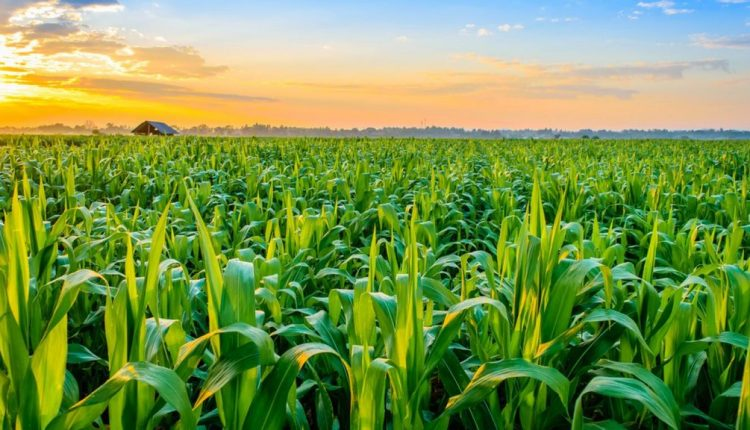 Delta investment summit highlights opportunities in agric