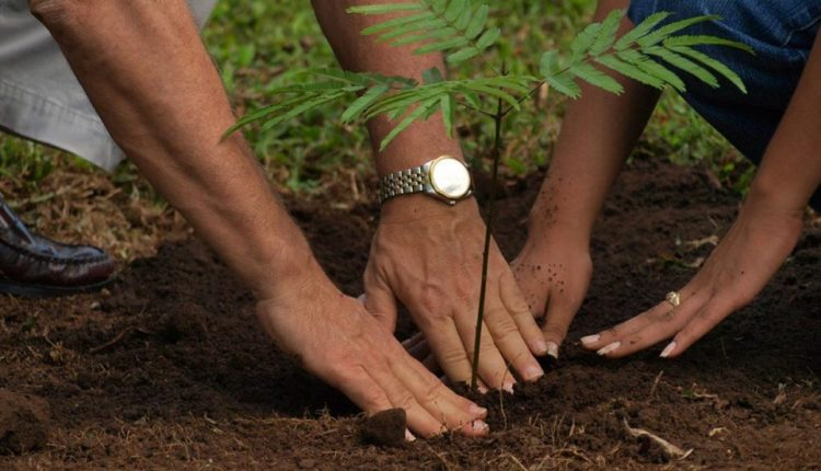 Lagos to plant 230,000 trees to tackle climate change