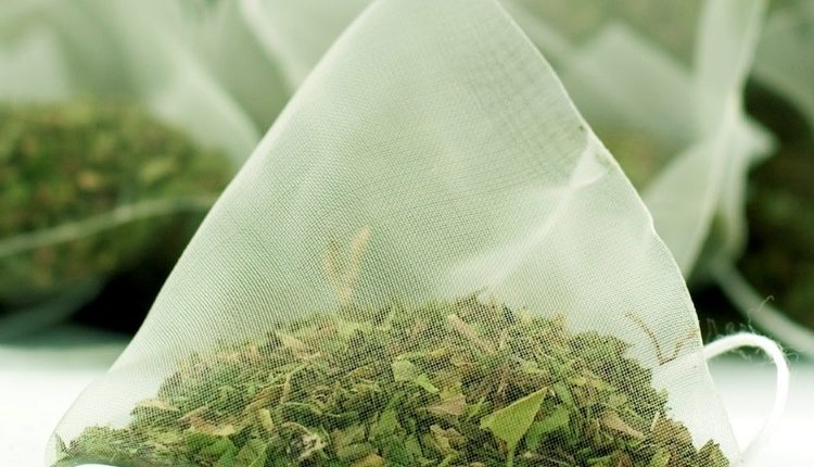 How to invest in moringa tea bag processing factory