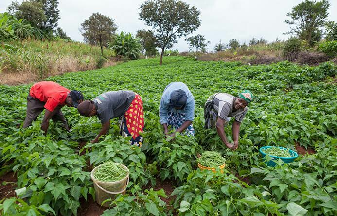1,269 farmers to benefit from FG's fertilizers in Edo LGA